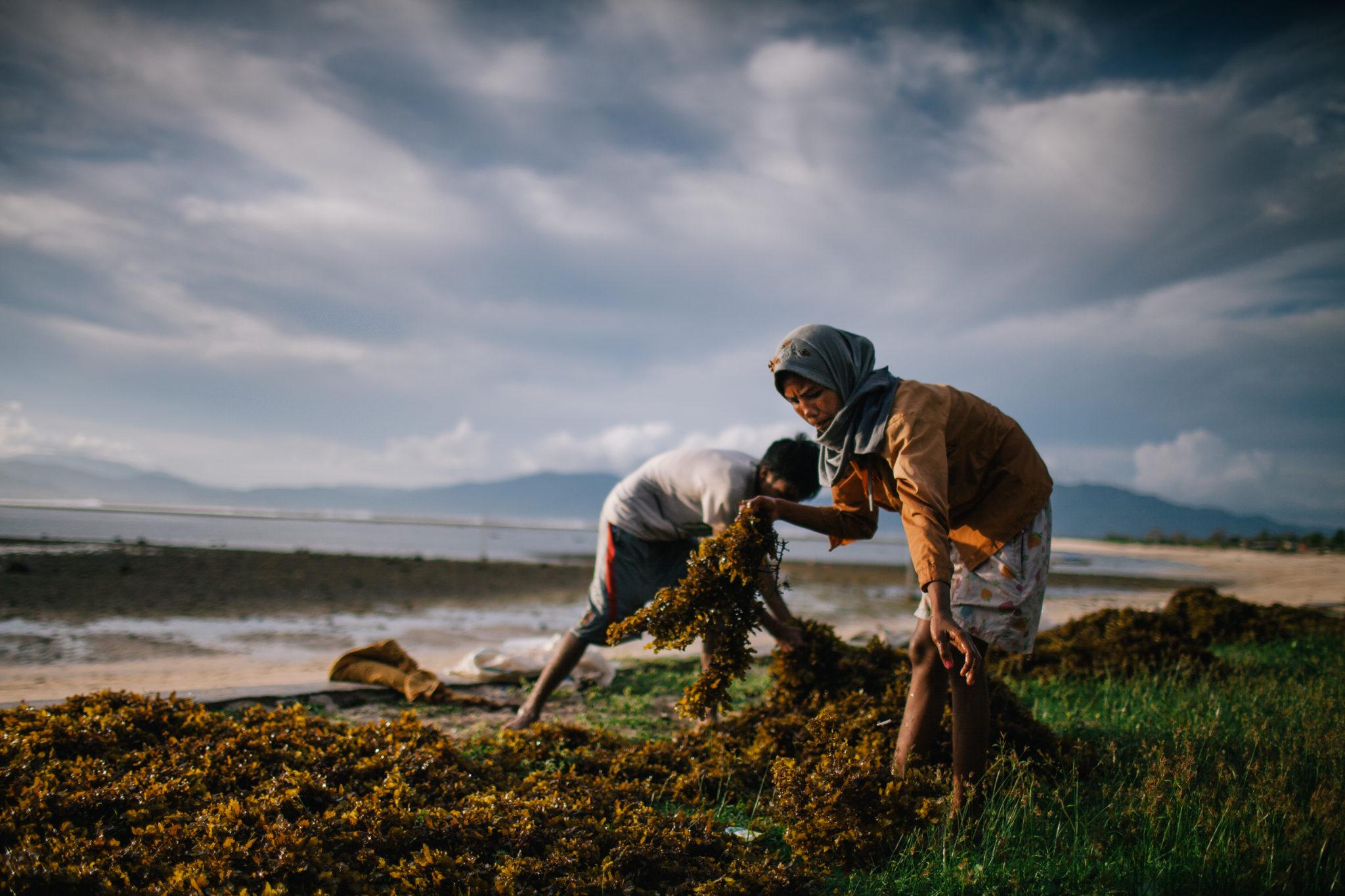 Sumbawa-seaweed-woman
