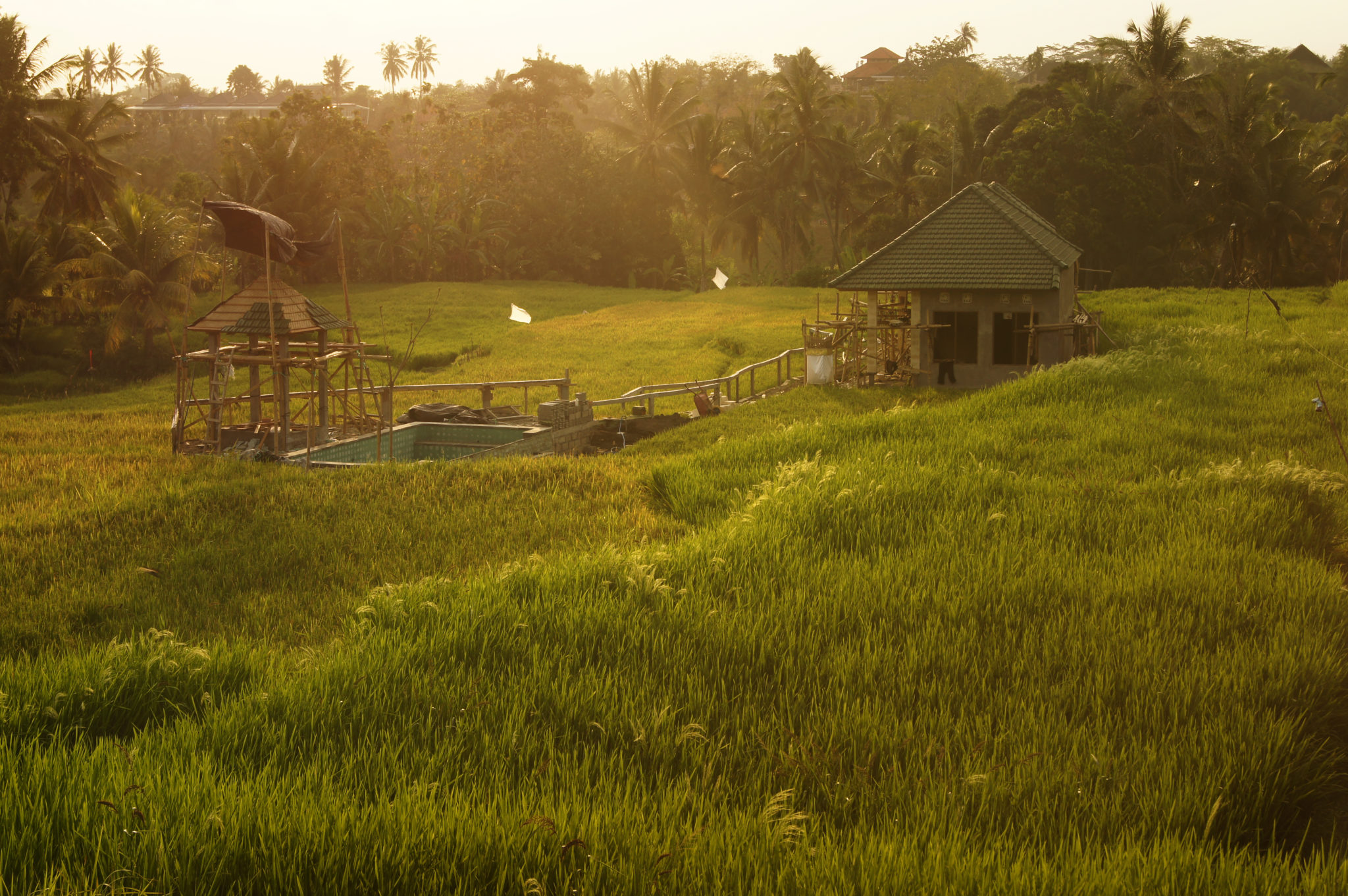 Indonesia-travel-guide-Rice-paddies-Bali