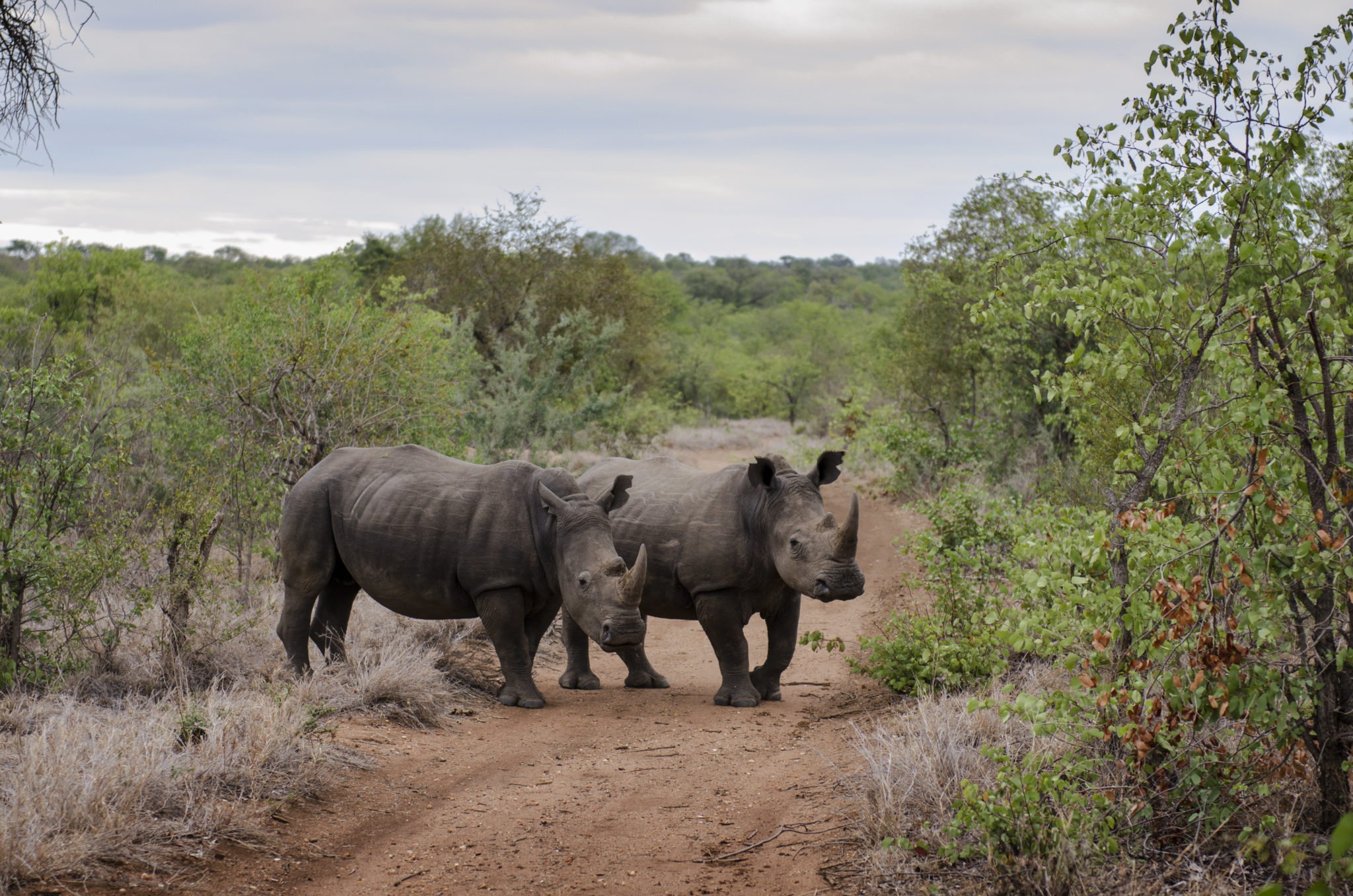 Things-to-do-in-South-Africa-Rhino-Safari