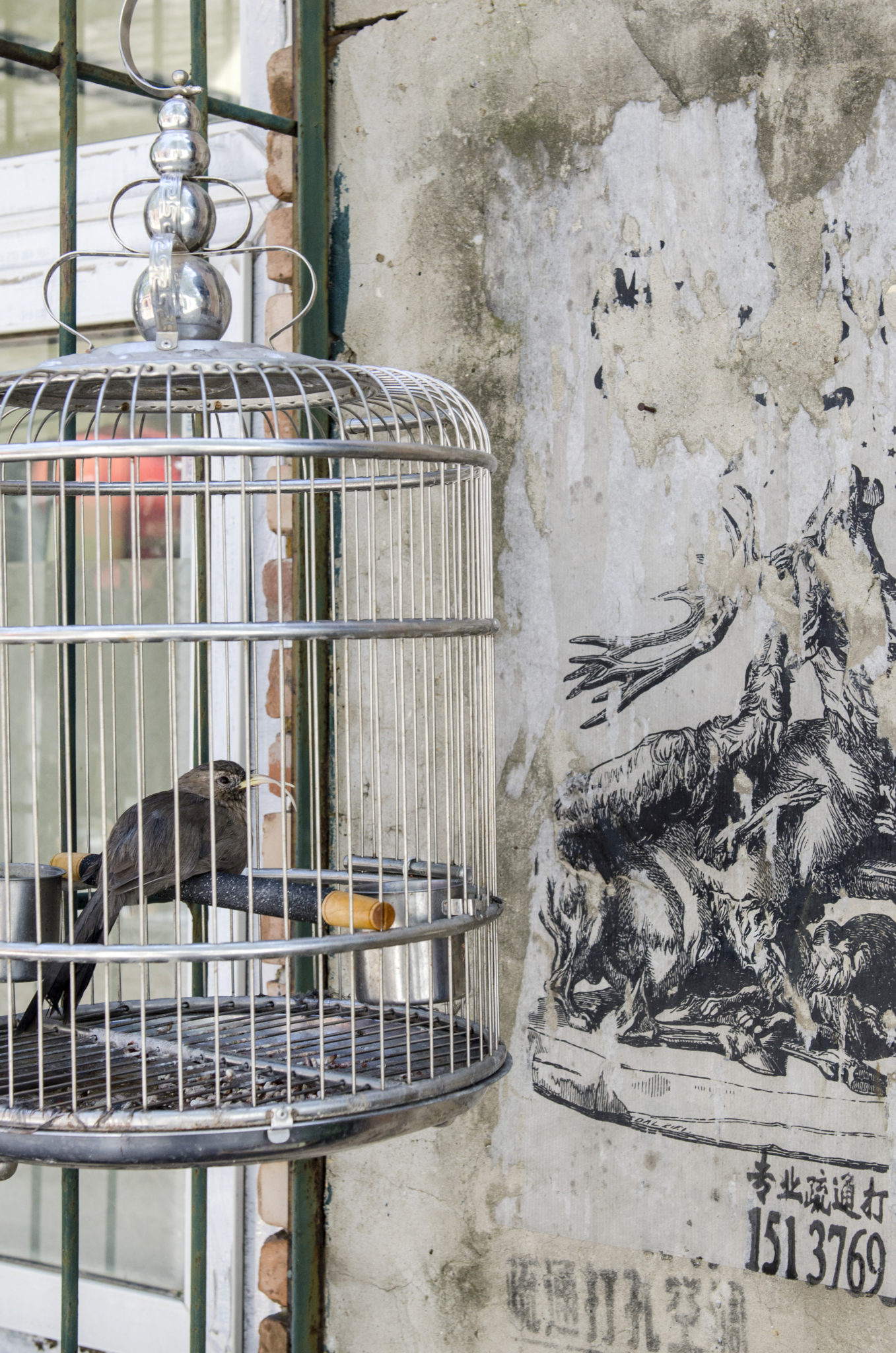 798-Beijing-Art-District-bird-cage