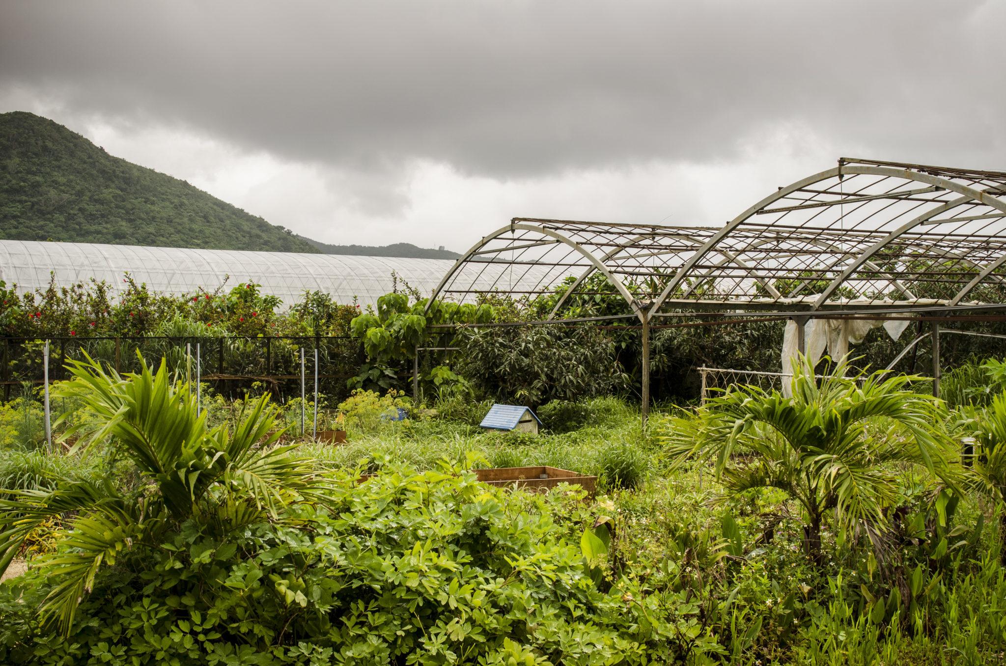 Ishigaki-Island-farm