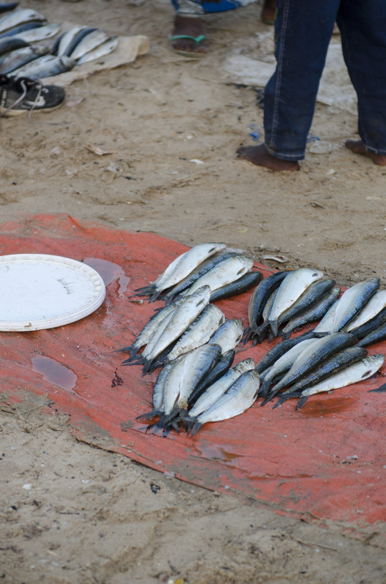 Fish-market-Mbour-fish-to-sell