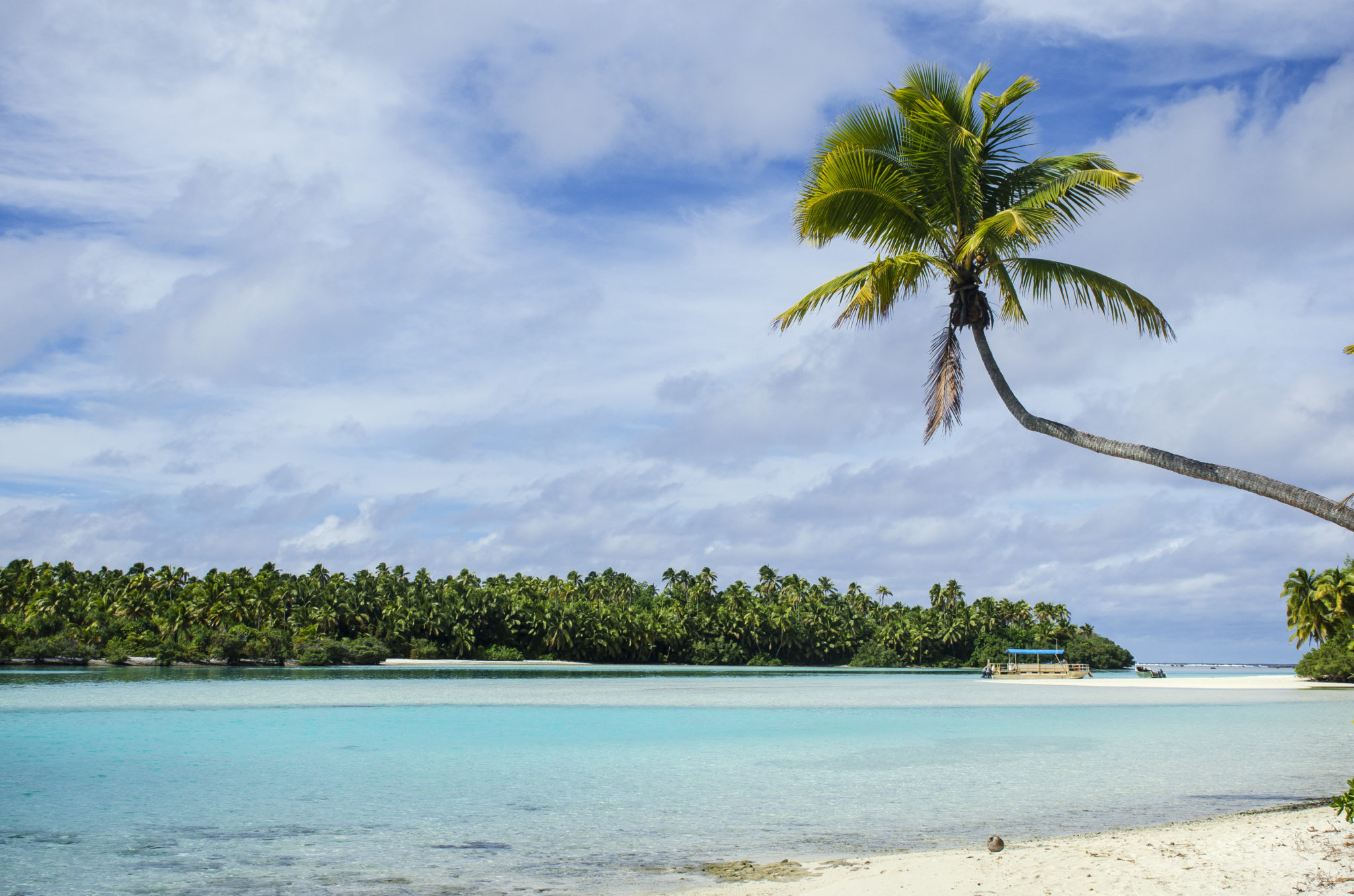 Could a palmtree be more perfect like the ones on Aitutaki, Cook Islands?