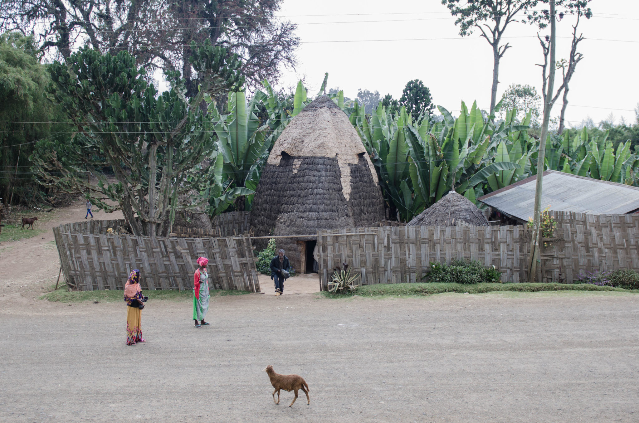 Dorze People in Ethiopia: Visiting the Dorze village is a must in Southern Ethiopia