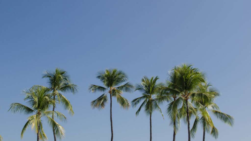 Hawaii Guide: Check out our free list of best of Hawaii.