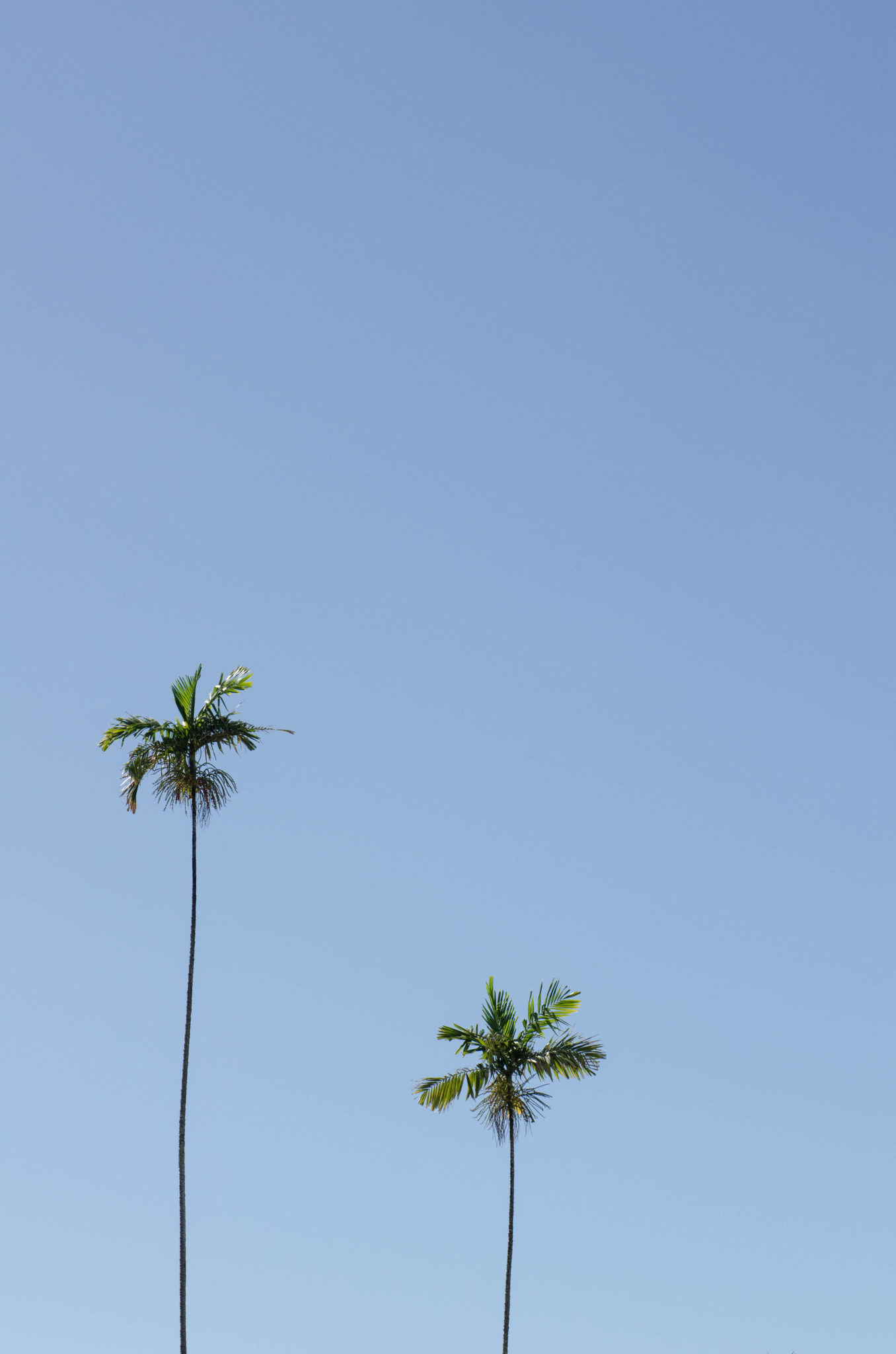 Hawaii Guide: Top things to do in Hawaii definitely involve watching palm trees.